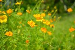 Fleurs jaunes abstraites brouillées dedans dehors Photographie stock