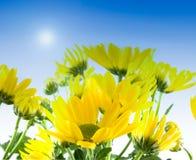 Fleurs jaunes au printemps Images libres de droits