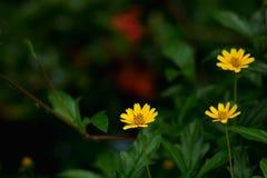 Fleurs jaunes avec de belles conserves au vinaigre Image stock