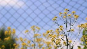 Fleurs jaunes avec des insectes banque de vidéos