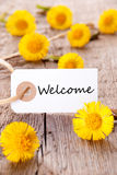 Fleurs jaunes avec l'accueil images stock