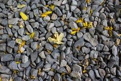 Fleurs jaunes avec le caillou Photos libres de droits