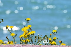 Fleurs jaunes avec le fond de mer de bokeh images stock