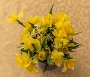 Fleurs jaunes avec les lames vertes Photographie stock libre de droits