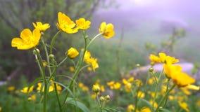 Fleurs jaunes balan?ant dans le vent Le fond est brouillé, mais les arbres évidents, brouillard, forêt verte banque de vidéos