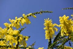 Fleurs jaunes, ciel Photographie stock libre de droits