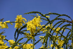 Fleurs jaunes, ciel Image stock