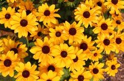Fleurs jaunes d'été Images libres de droits