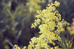 Fleurs jaunes d'été Photo stock