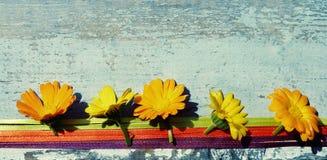 Fleurs jaunes d'été d'un souci sur une surface en bois Fleurs de Calendula images stock