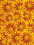 Fleurs jaunes d'Eautiful Image stock