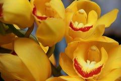 Fleurs jaunes d'orchidée images stock