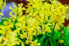 Fleurs jaunes d'orchidées d'Ascocenda décorées à l'airpo de Suvarnabhumi Image stock