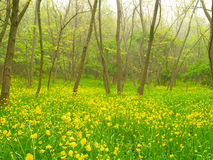 Fleurs jaunes dans la forêt Photo stock