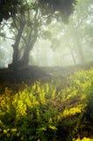 Fleurs jaunes dans la forêt enchantée avec le brouillard image libre de droits