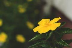 Fleurs jaunes dans la surface de floraison à l'air Photo libre de droits