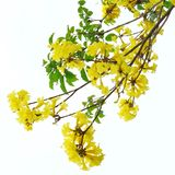 Fleurs jaunes dans le ciel Photo libre de droits