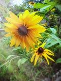 Fleurs jaunes dans le jardin frais de matin Image stock