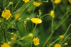 Fleurs jaunes dans le jardin photographie stock libre de droits