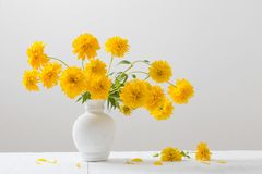 Fleurs jaunes dans le vase sur le fond blanc Photo stock