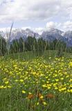 Fleurs jaunes dans les dolomites Photographie stock libre de droits