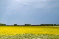 Fleurs jaunes dans un domaine Image stock