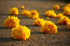 Fleurs jaunes de coton en soie Image libre de droits