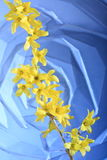 Fleurs jaunes de forsythia   Photo stock