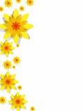 Fleurs jaunes de ressort Photo libre de droits