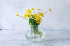 Fleurs jaunes de ressort dans un vase sur un fond blanc image libre de droits
