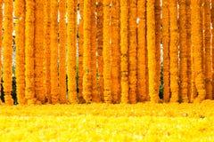 Fleurs jaunes de souci Photo libre de droits