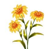 Fleurs jaunes de vecteur Images stock