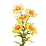 Fleurs jaunes de vecteur Photographie stock libre de droits