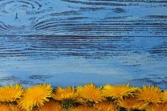 Fleurs jaunes de vue Photographie stock libre de droits