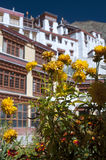 Fleurs jaunes devant le monastère Rhizong, Ladakh, Inde de budhist Image libre de droits