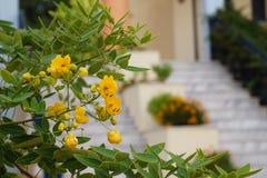 Fleurs jaunes devant les escaliers brouillés Image stock