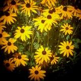 Fleurs jaunes en heure d'été Photos stock