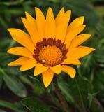 Fleurs jaunes en parc Image stock