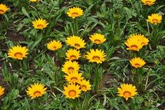 Fleurs jaunes en parc Photo libre de droits