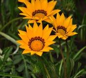 Fleurs jaunes en parc Photographie stock
