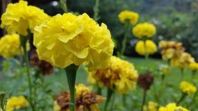 Fleurs jaunes encore image libre de droits