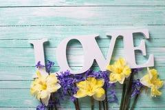 Fleurs jaunes et bleues fraîches de ressort et amour de mot sur la turquoise Photos libres de droits