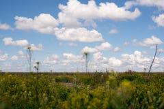 Fleurs jaunes et ciel bleu images libres de droits