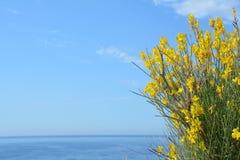 Fleurs jaunes et ciel bleu Image stock