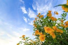 Fleurs jaunes et ciel bleu avec le nuage image stock