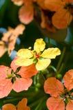 Fleurs jaunes et oranges image libre de droits