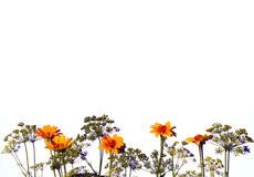 Fleurs jaunes et plantes vertes images stock
