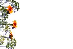 Fleurs jaunes et plantes vertes image libre de droits