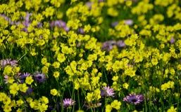 Fleurs jaunes et pourpres sauvages image libre de droits