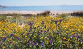 Fleurs jaunes et violettes à la plage méditerranéenne images libres de droits